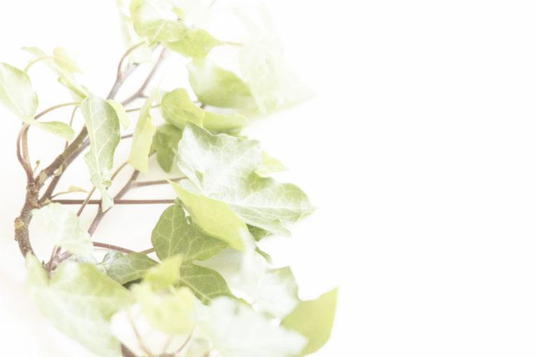 ivy leaves green landscape design